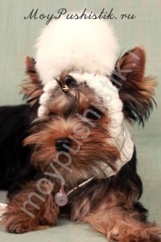 Шапка для собак - белая